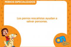 marco_perros7