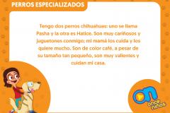 marco_perros9